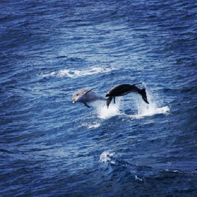 Sea Tobounce Prance Instagood instalove dolphin
