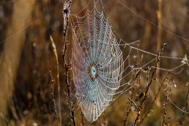 Dew Drops Fall Focus On Foreground Light Pattern Sony A6000 Spider Spider Web Web