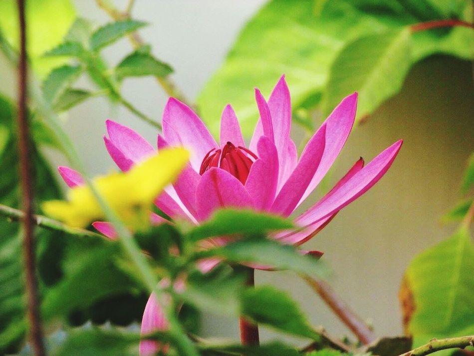 Spring blossom Lilies Flower Beauty In Nature Freshness Nature Growth Blooming Pink Color Plant Outdoors No People Lilies In Bloom Spring Flowers Vietnam Travel Photography Beauty In Nature Beautiful Beauty