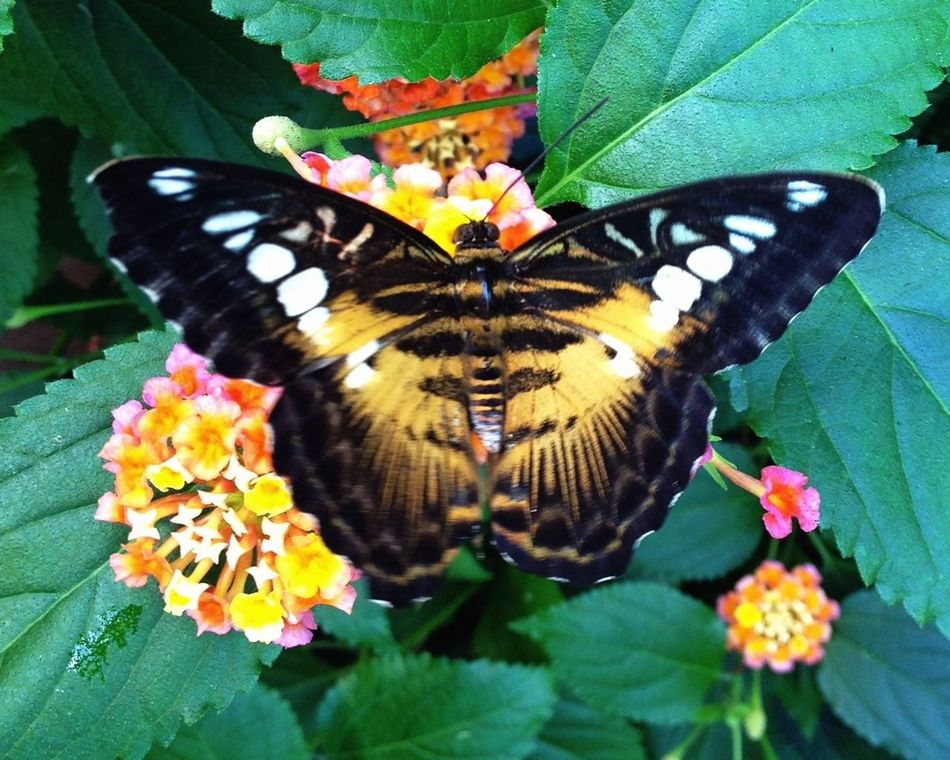 Nature Butterfly Nature_collection EyeEm Nature Lover