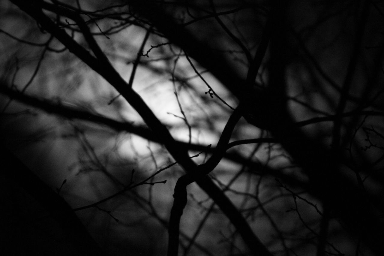 Bare Tree Branch Close-up Cloud - Sky Dark And Personal Nature Night Photography No People Outdoors Seeing Through The Branches Silhouette Sky Tree