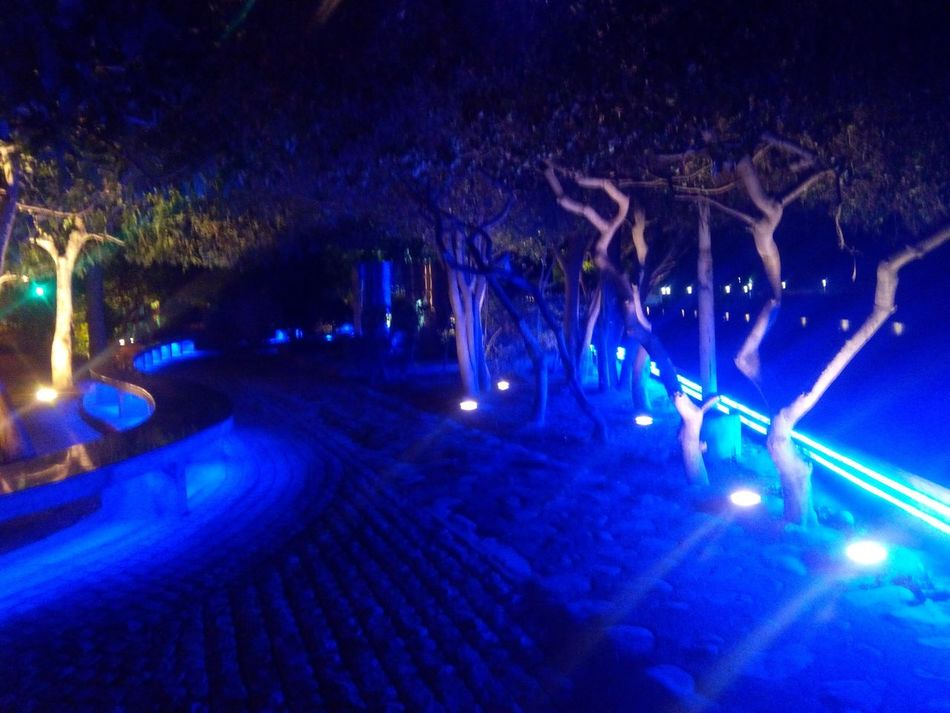 The Blue Forest Sukhna Lake Night Photography Beautiful Lights