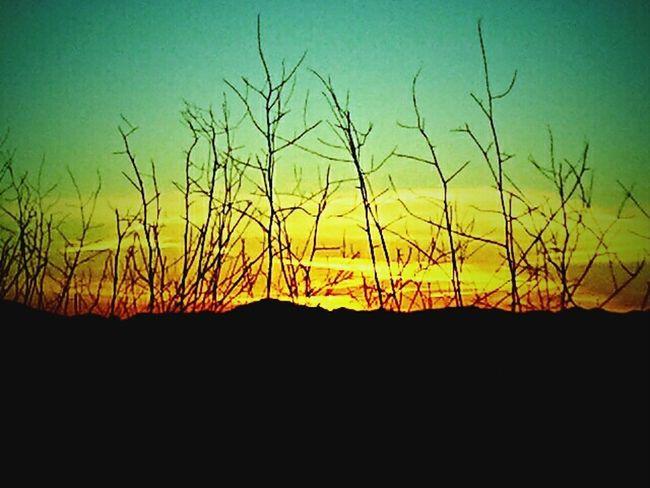 Sunset Silhouettes Sunset EyeEm Sunset Beautiful Nature