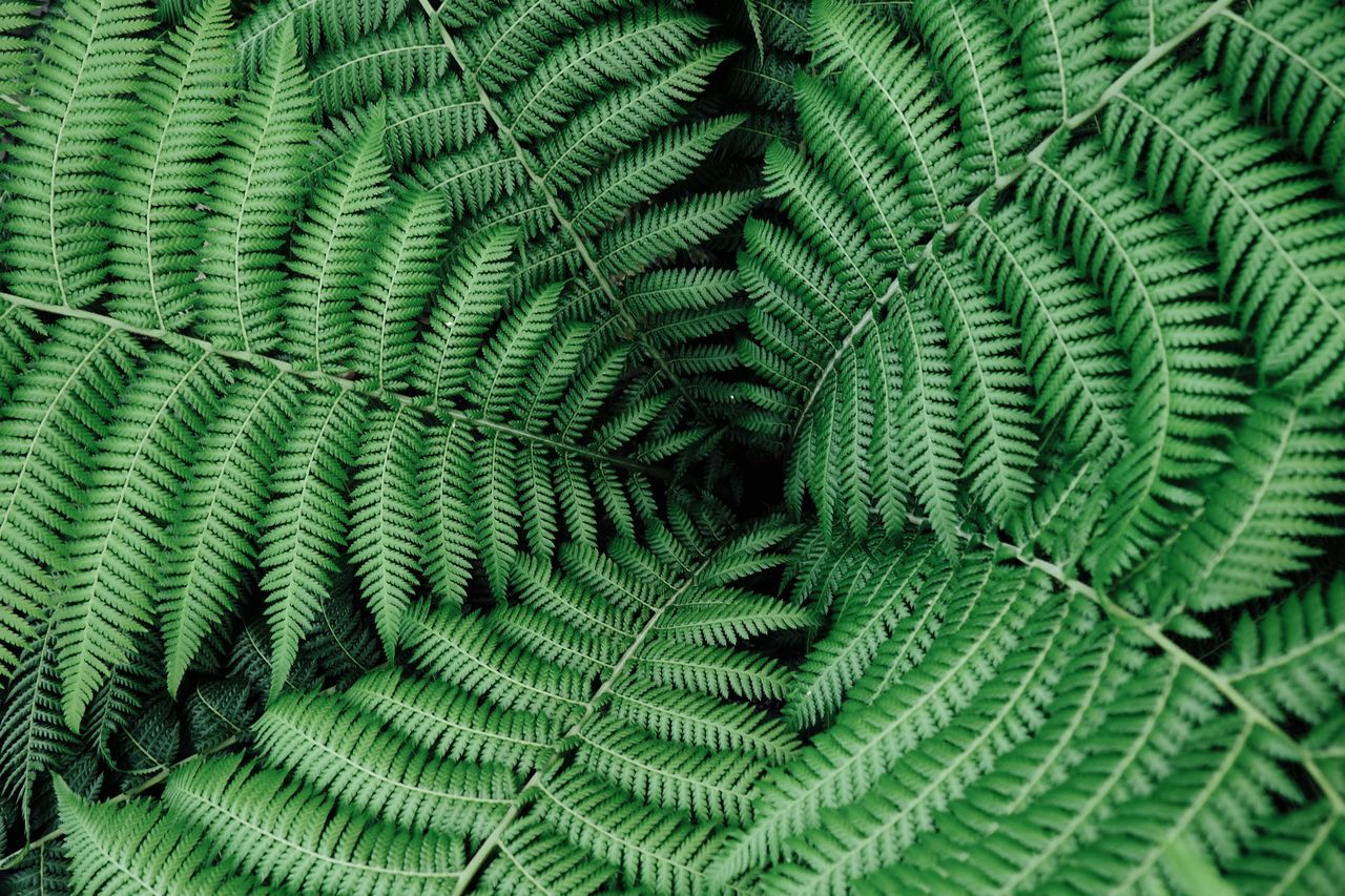 Backgrounds Beauty In Nature Black Hole Close-up Complexity Copy Space Dark Day Exotic Fern Fragility Freshness Full Frame Green Color Growth Leaf Misterious Nature No People Outdoors Plant