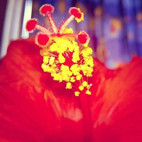 Shoe_flower Lumia_pic Lumia920 Nokia_camera Picoftheday Camera_addict