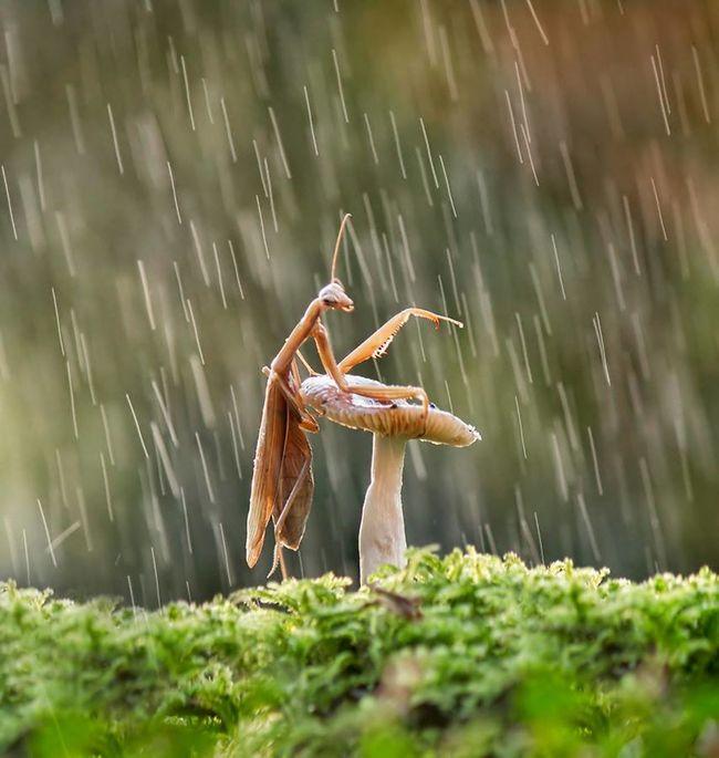 Mantis Collections Mantis. MantisReligiosa Mantislover Animal Themes Day Drop Freshness Grass Mantis Mantis Head Mantis In The Garden Mantis Mouth Mantis On Flower Mantis Pose Mantis Style MantisMacro Mantisgram Motion Nature No People Outdoors Spraying Water Wet EyeEmNewHere Pet Portraits