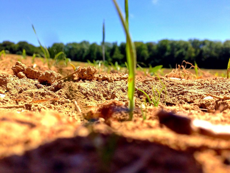 Beautiful stock photos of plant, Achievement, Agriculture, Cropping, Crops