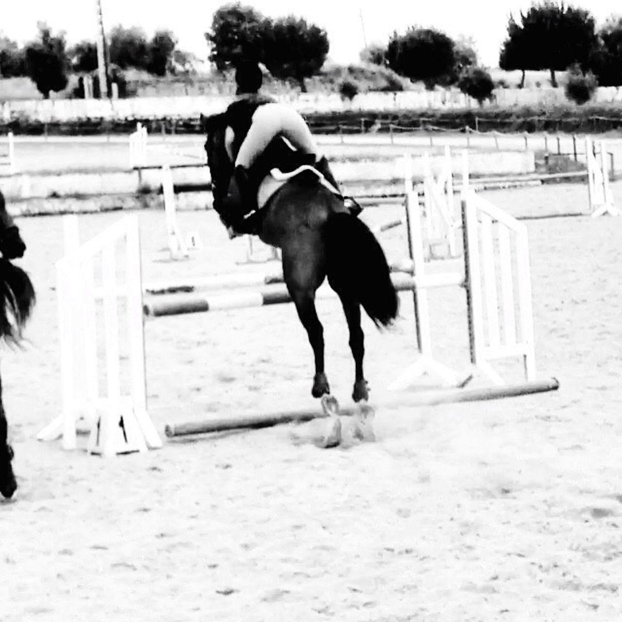 Letsjump  ArtisteDesLibaux Horseslife Horseslove That's Me Nature Letsgo ILoveThis Ilovehim 😍💕