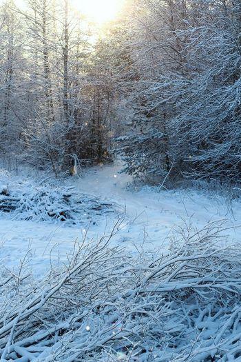 Winter Wintertime Skazka