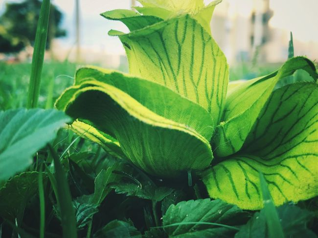 Plant Nature Green Color Close-up Focus On Foreground Freshness Outdoors Beauty In Nature Day