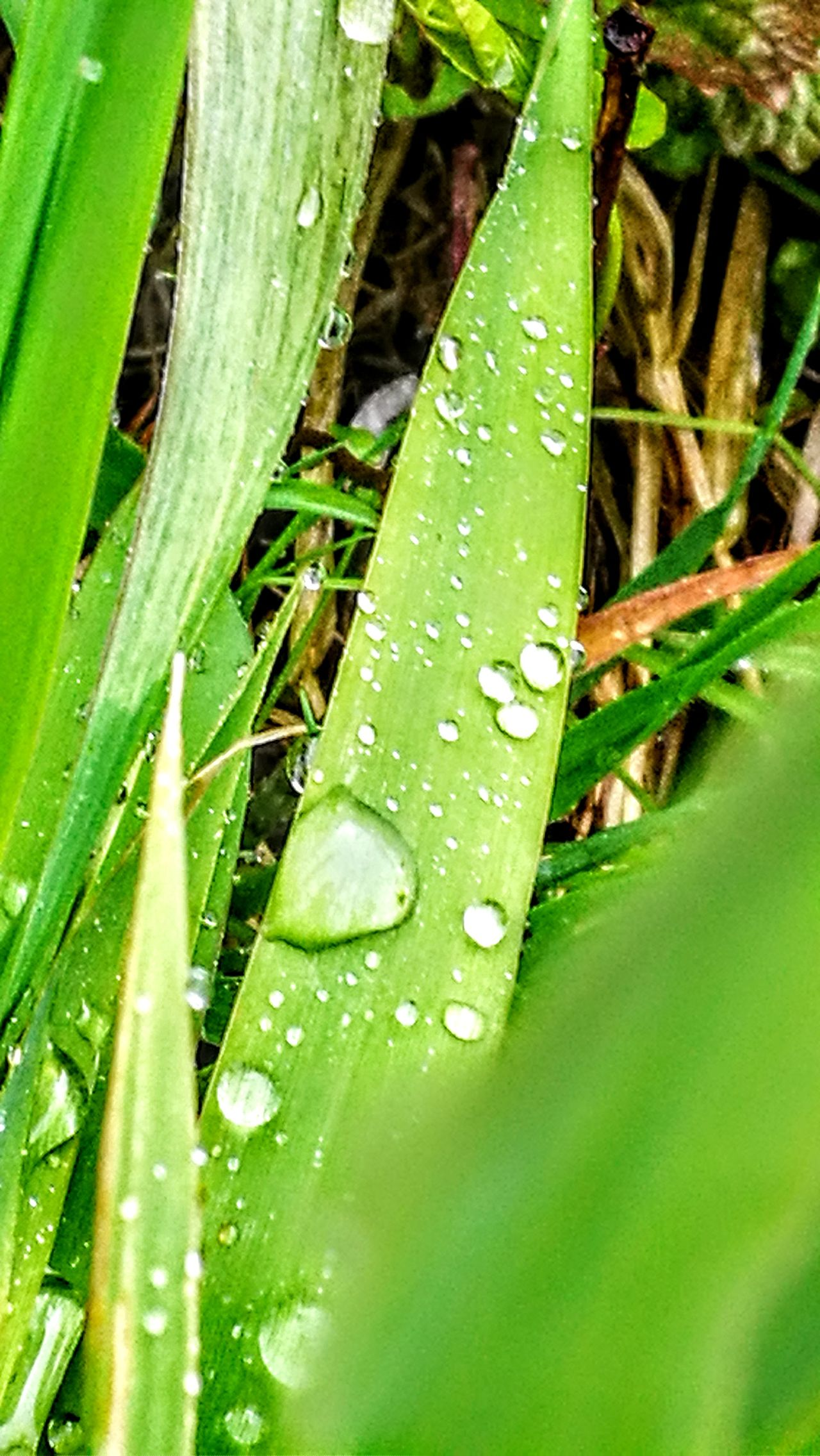 After the big rain... Green Color Nature Growth Leaf Close-up Plant Day Outdoors No People Beauty In Nature Water Freshness RainDrop Beauty In Nature GetbetterwithAlex Wendland Originalpicture