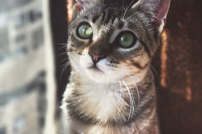 Her name is Olive, but we just call her Vee around here Cat Kitten Beautiful Love