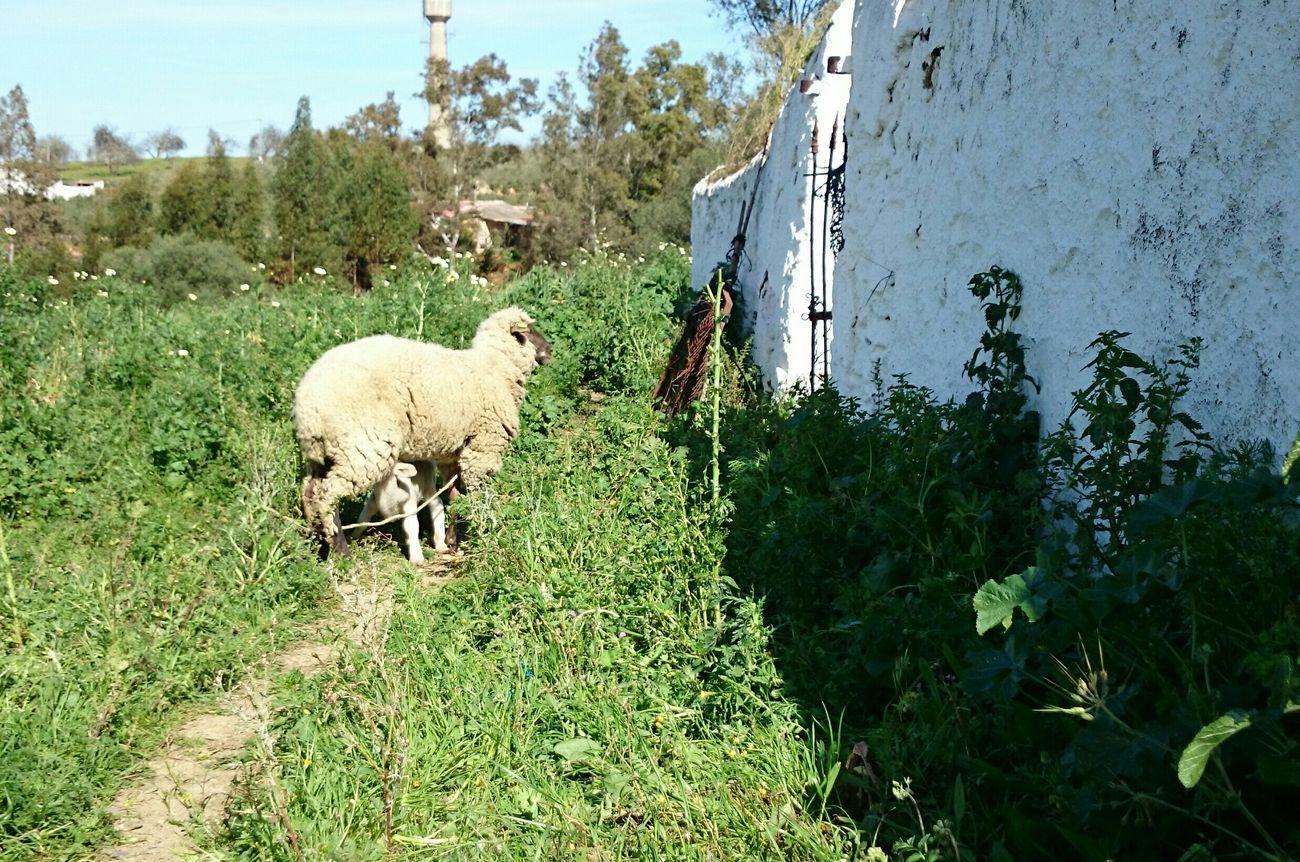 Lavida Relaxing Amo Mi Huelva Disfrutando De La Vida Streamzoofamily Somosfelices Enjoying Life