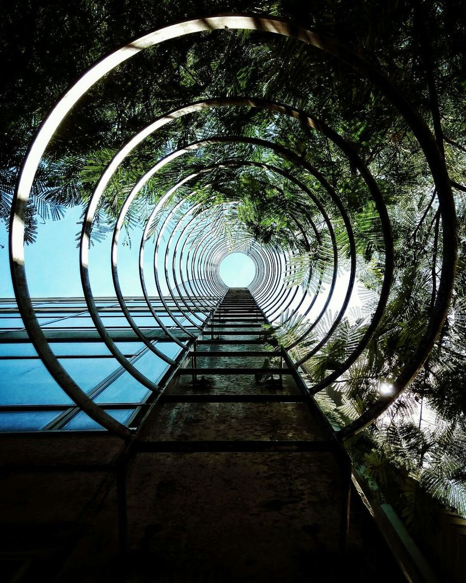 The City Light Tree No People Outdoors Sky Concentric Tunnel Nature Day São Paulo Staircase Minimalist Architecture Low Angle View Architecture Clear Sky Looking Up Circles Circles In Circles