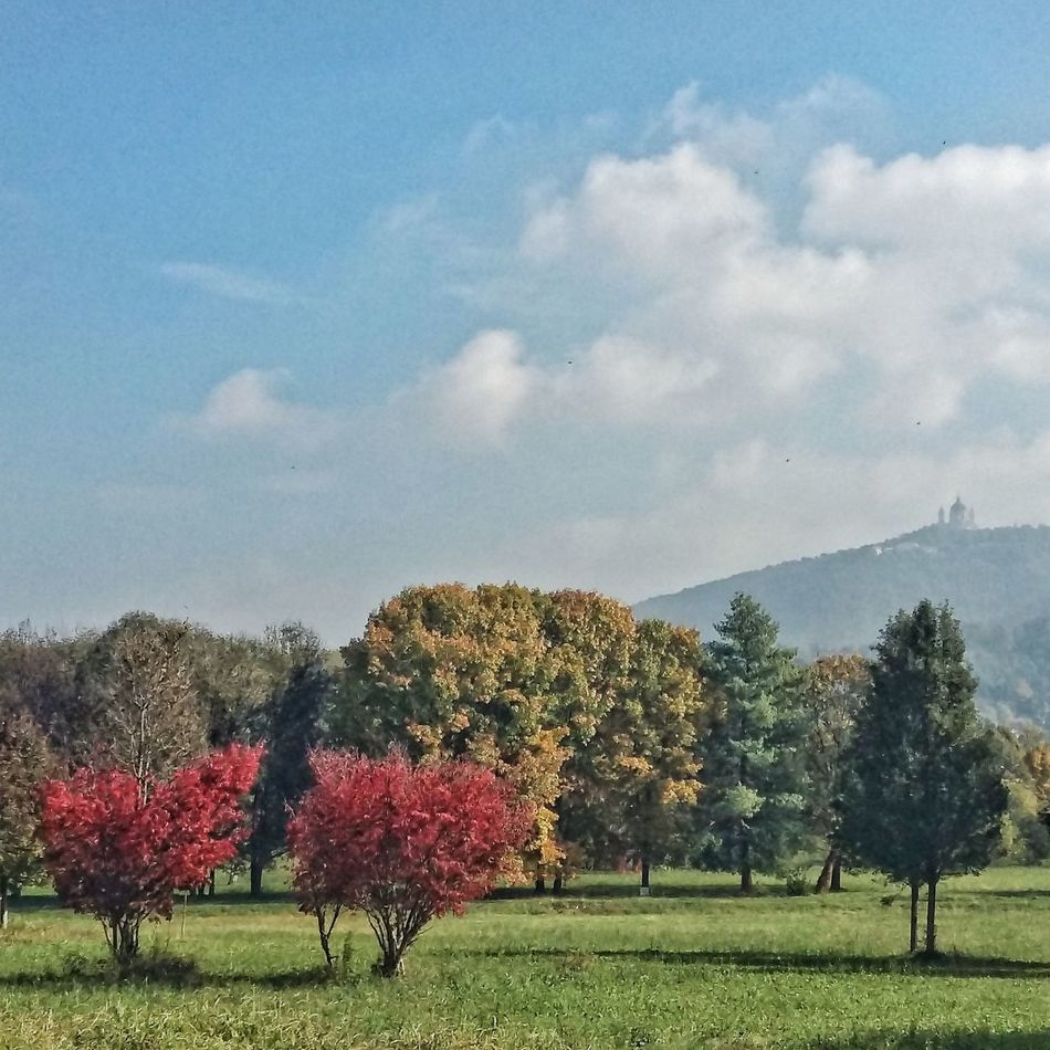 Turin. Colletta park. Tree Nature Sky Growth Flower Cloud - Sky No People Grass Tranquil Scene Beauty In Nature Outdoors Day Lush - Description Superga (To) Turin Italy Red Tree Gviarizzo EyeEmNewHere