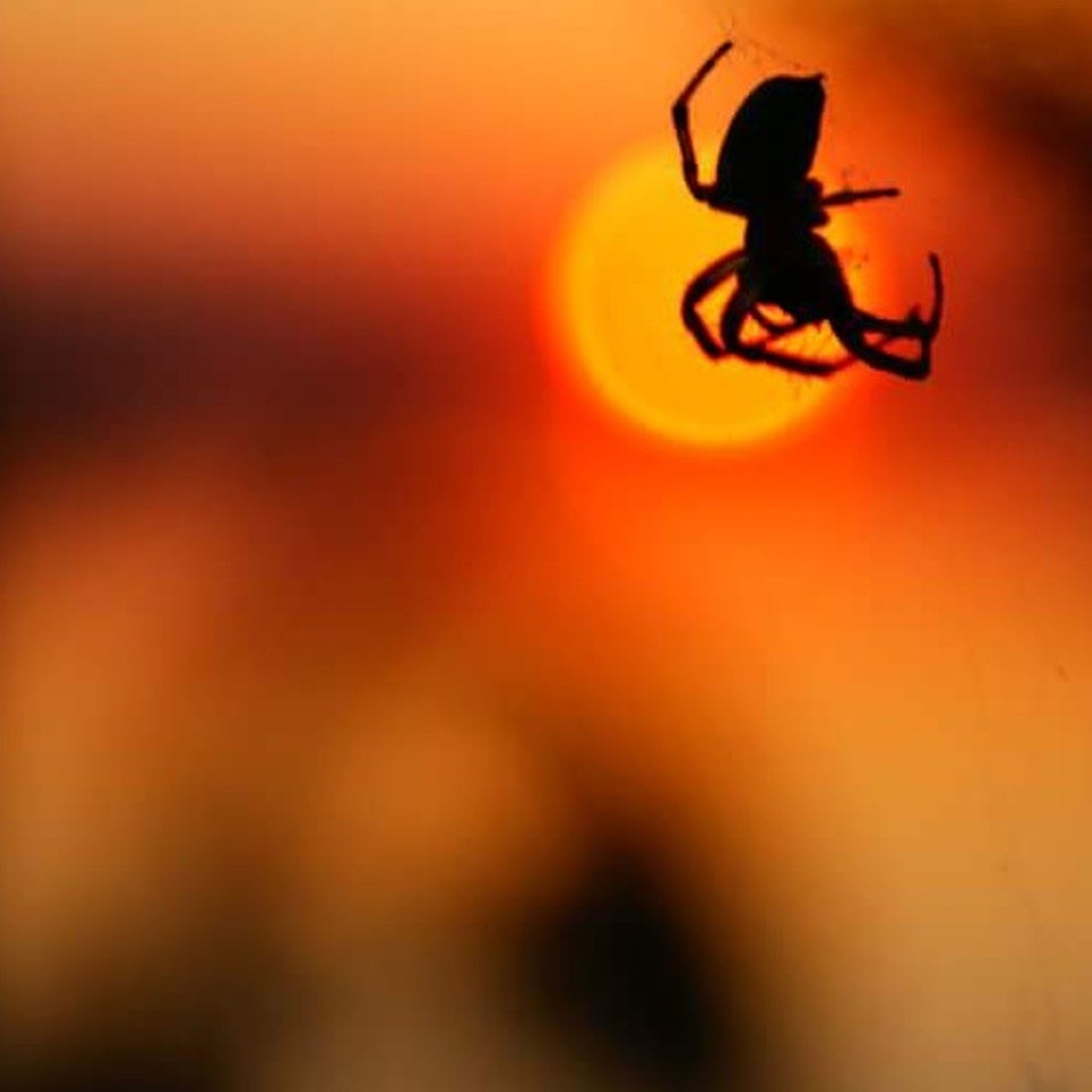 silhouette, mid-air, one person, close-up, outdoors, day, people, only men