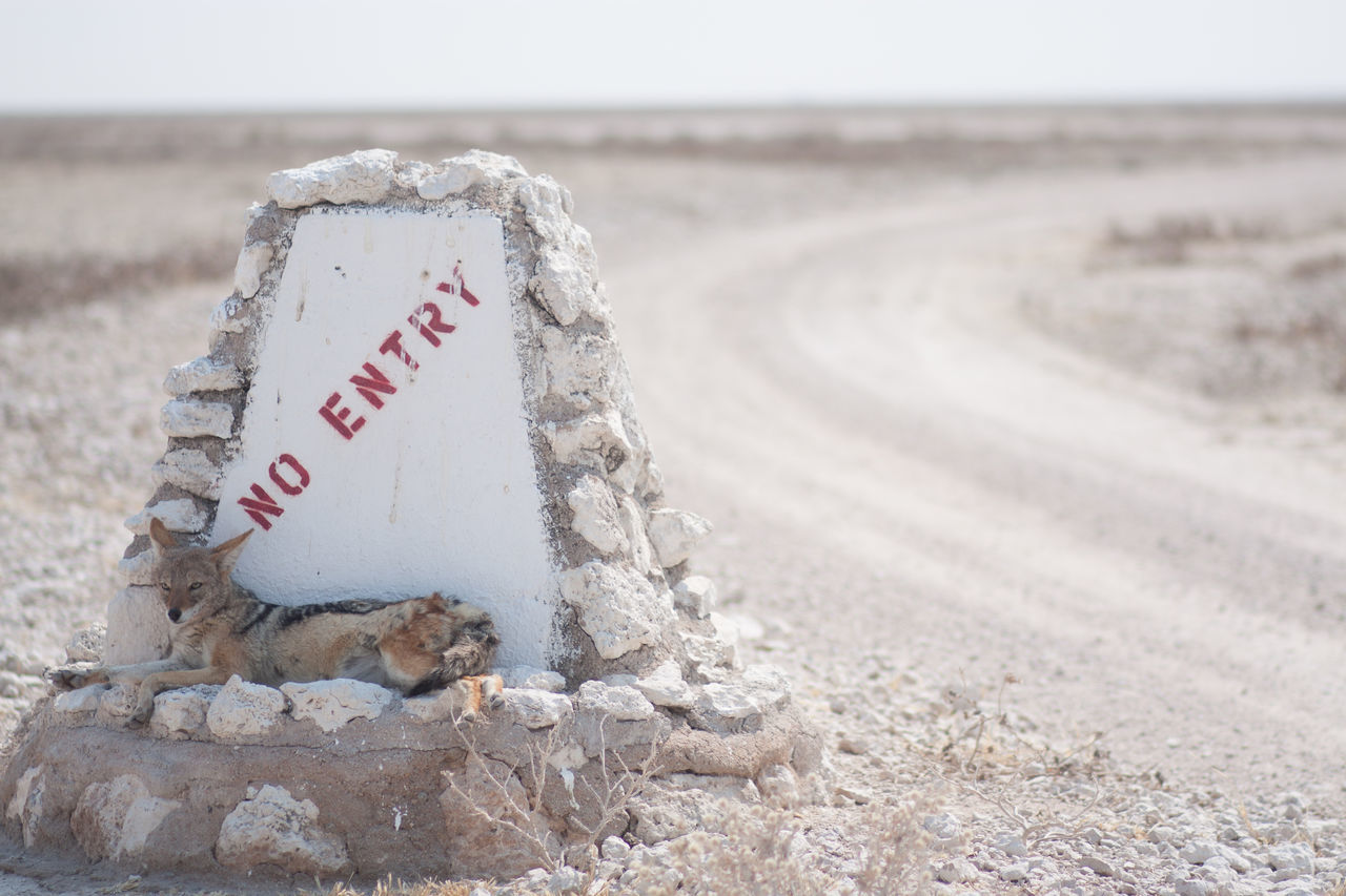 Beautiful stock photos of text, Animal Themes, Day, Desert, Dirt Road