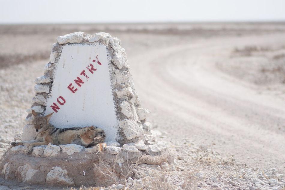 Beautiful stock photos of text, Animal Themes, Day, Desert, Dirt Road