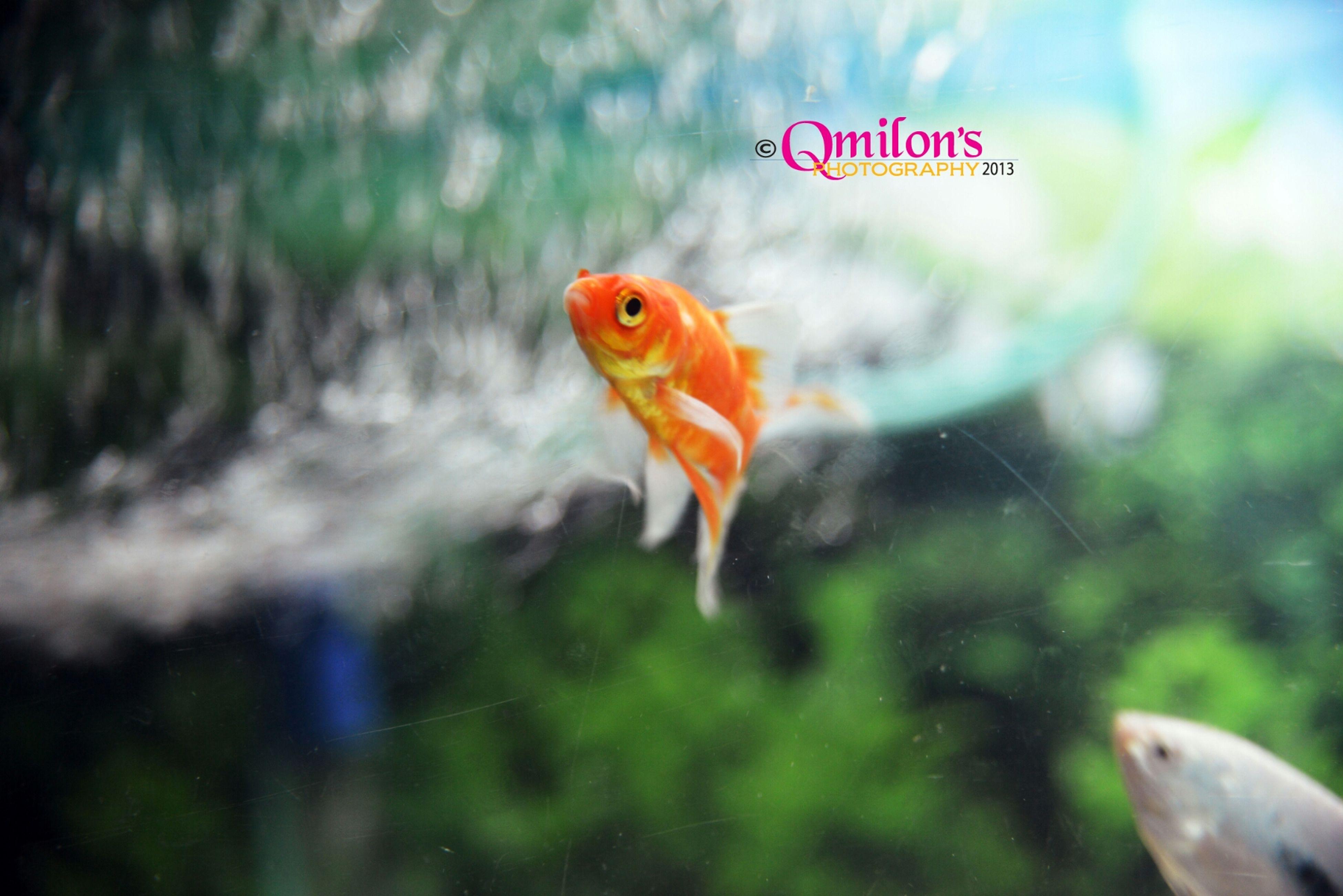 Beautiful ♥♥♥ EyeEm Nature Lover EyeEm Best Shots Fish Aquarium