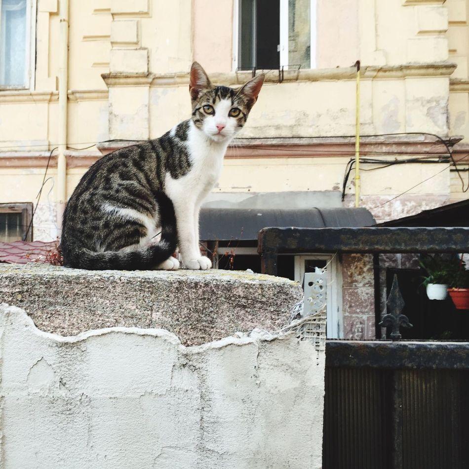 Cat Cat Lovers Catsofinstagram Cat♡ Catoftheday Caturday Kitty Kitten Kitty Cat Ilovemycat Ilovecats Ilovecat