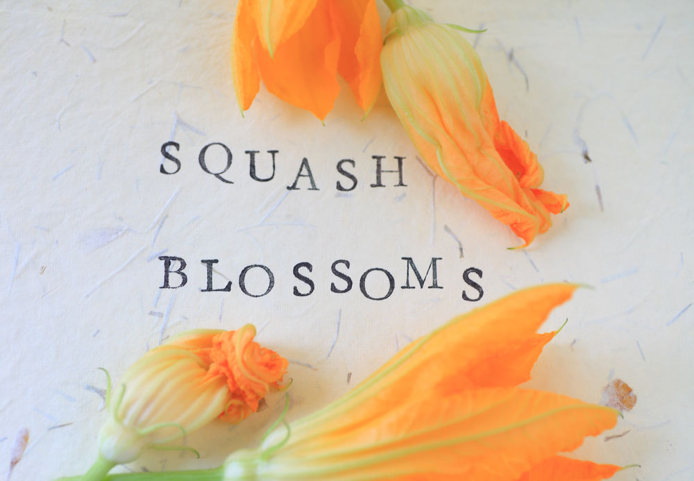 Flowers of squash plants Biology Botanical Close-up Communication Delicate Flowers Font Gardening Green Horticulture Letters Natural Light No People Overhead Paper Squash Blossoms Text Textured Background Textures Type Typography Variations Vegetables Words Yellow-orange