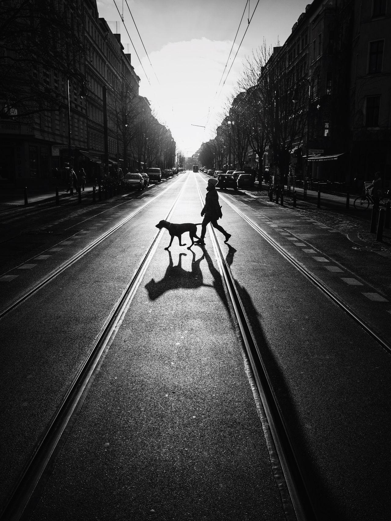 shadows. Shadow Shadows Dogwalking Dog Streetphotography