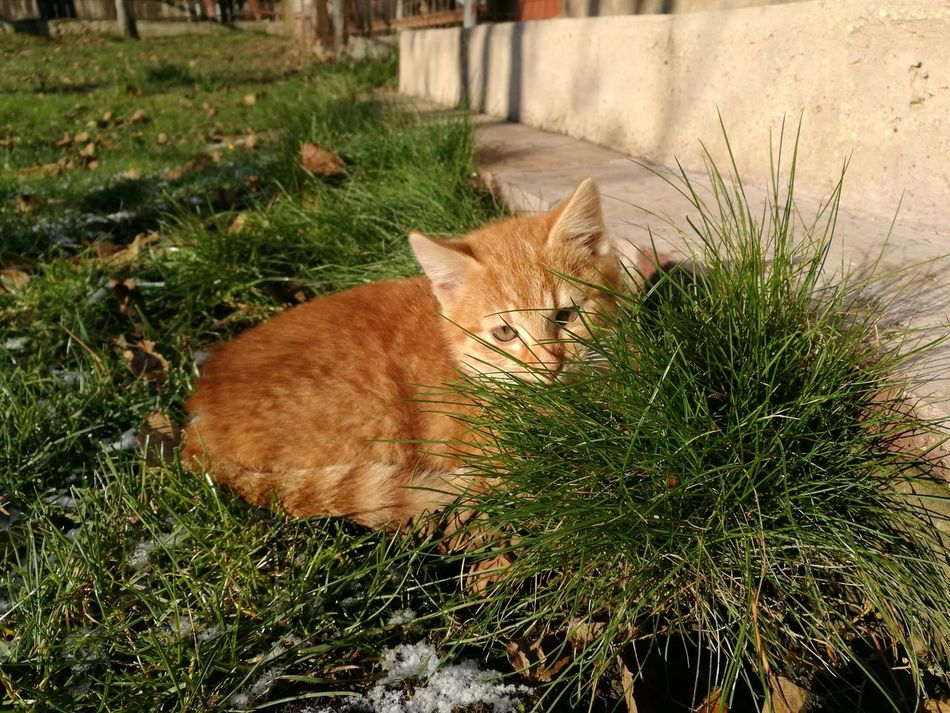 Grass Sunlight Nature No People Shadow Outdoors Growth Day Tree Stump Tree Close-up Beauty In Nature Mammal cat garden My Year My View Relaxation Nature Beauty In Nature Domestic Cat Domestic Animals One Animal Feline Pets Sun Hat Vacations