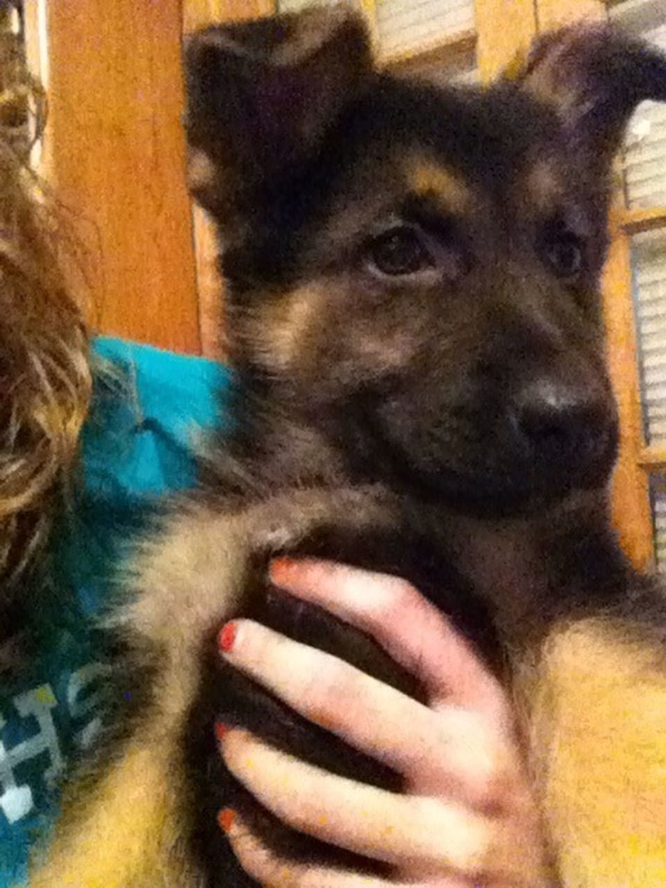 My Brothers New Dog!