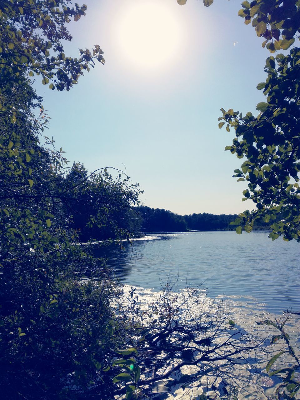 tree, sunlight, sun, sunbeam, nature, no people, water, outdoors, growth, beauty in nature, tranquil scene, day, tranquility, lake, scenics, plant, sky, branch, leaf, clear sky, scenery