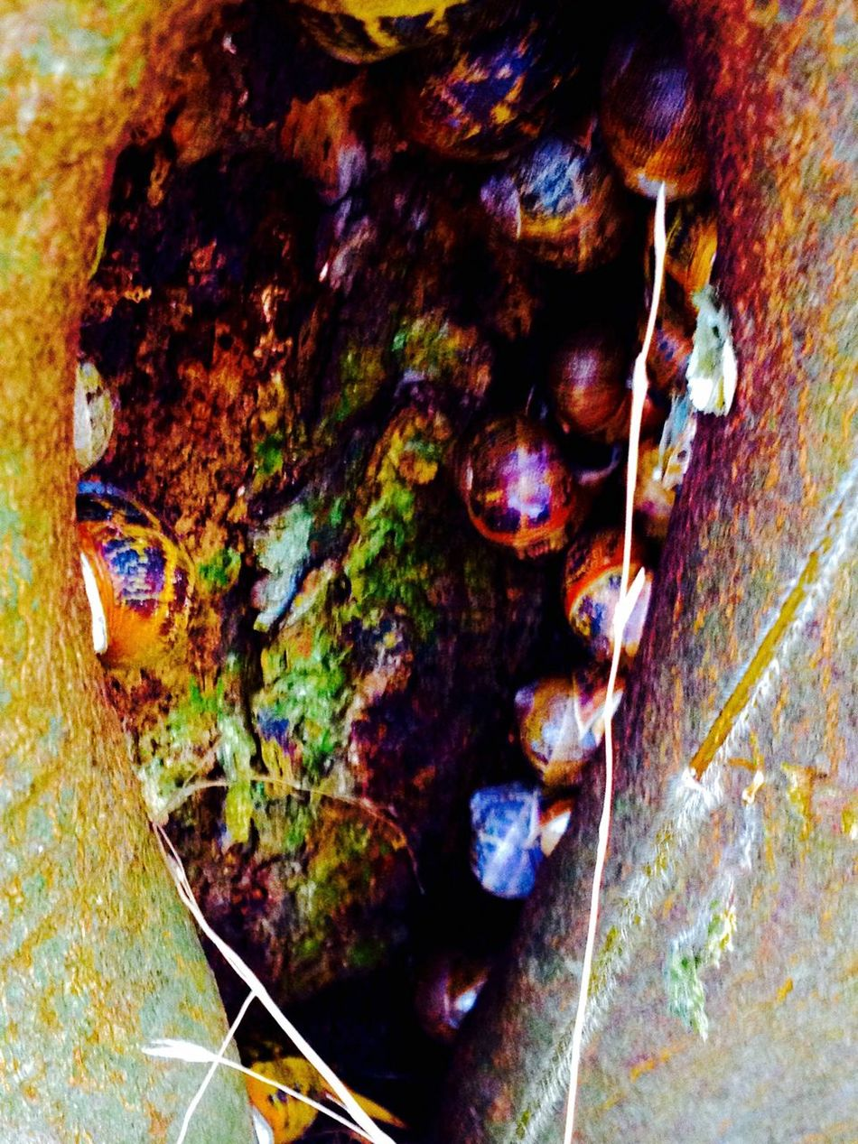 Psychedelic snails!