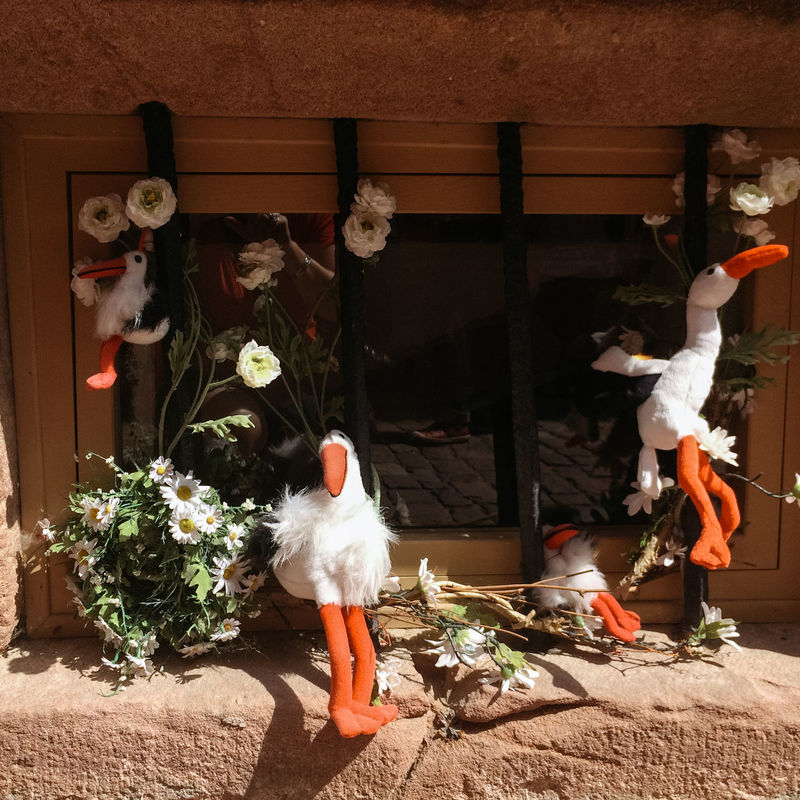 Window decorated with toy storks, Riquewihr, Alsace, France Alsace Childhood Close Up Close-up Decoration Exterior Flower Focus On Foreground France Fun Holding Red Riquewihr Softness Stork Storm Toy White White Color Wind