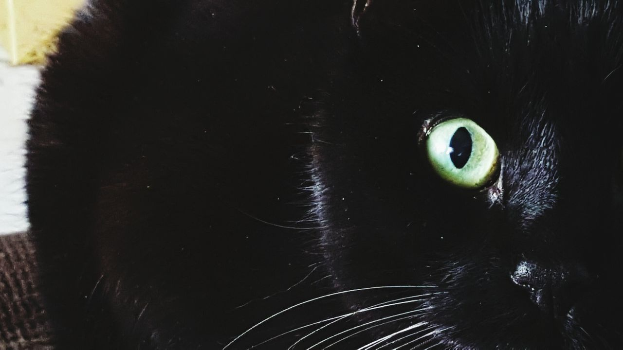 Captive... Cat Indoors  Close-up Capturing Movement Eyesight Animal Photography Capturing The Moment