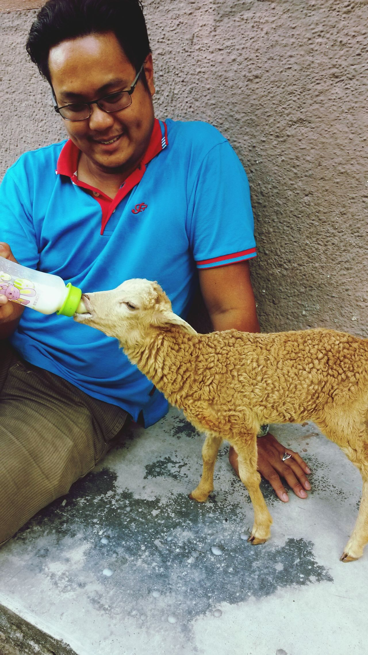 Lactating goats milk fresh kid sheep One Animal One Person Domestic Animals Animal Themes Real People Livestock Farmer Mammal Pets Occupation One Man Only Agriculture Sheep Adults Only Working Indoors  Day People Only Men Adult Milk Sheep Farm Kid Happy Man