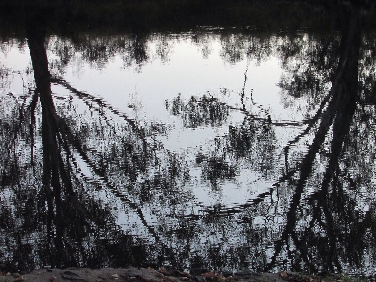 Taking Photos Water Reflections Reflection Tree Autumn Murrayriver River