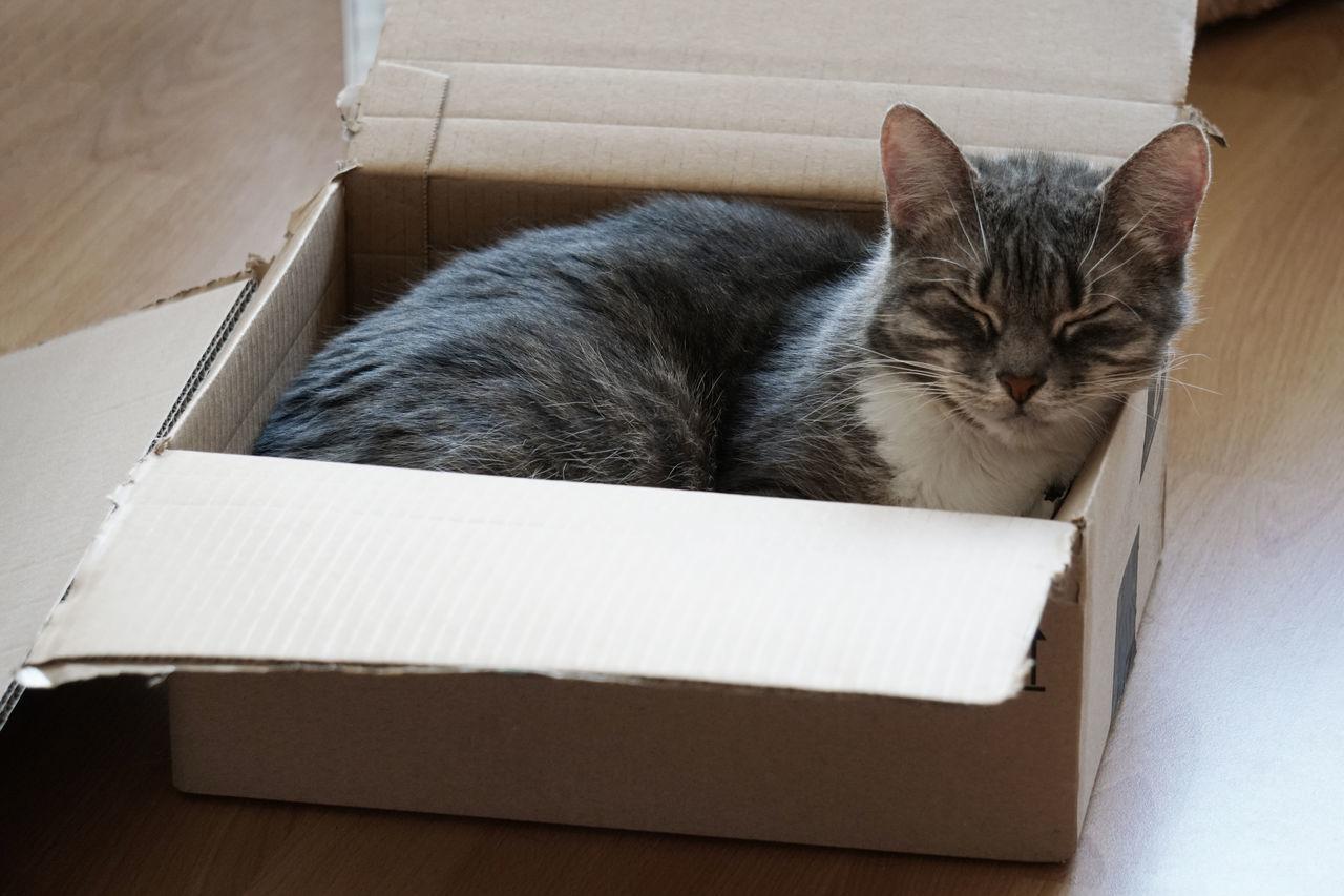 Animal Themes Asleep Box - Container Cardboard Cardboard Box Cat Cat In A Box Domestic Animals Domestic Cat Feline Indoors  No People One Animal Pet Pets Sleeping Sleeping Cat