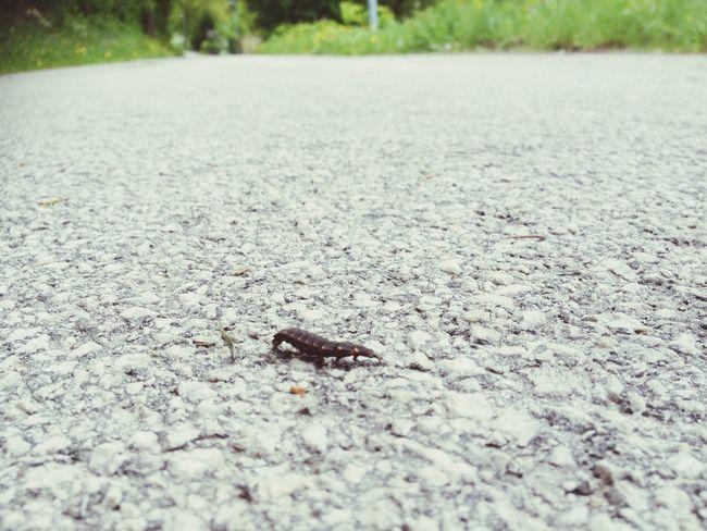 Centipede On The Road Slovenia Jesenice Bikers Road