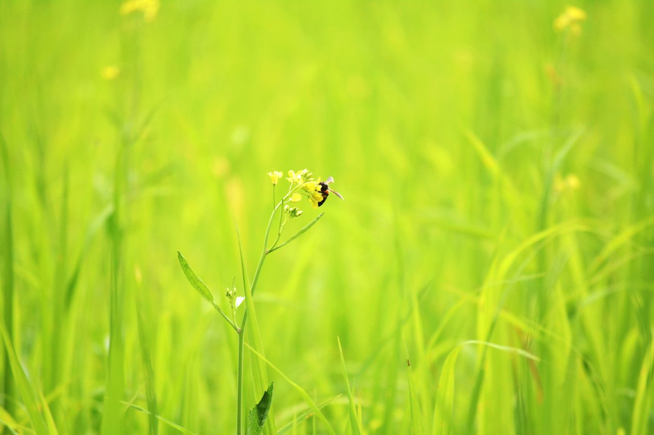 One Animal Animal Themes Animals In The Wild Insect Grass Green Color Nature Plant Animal Wildlife Outdoors Day Field No People Growth Focus On Foreground Close-up