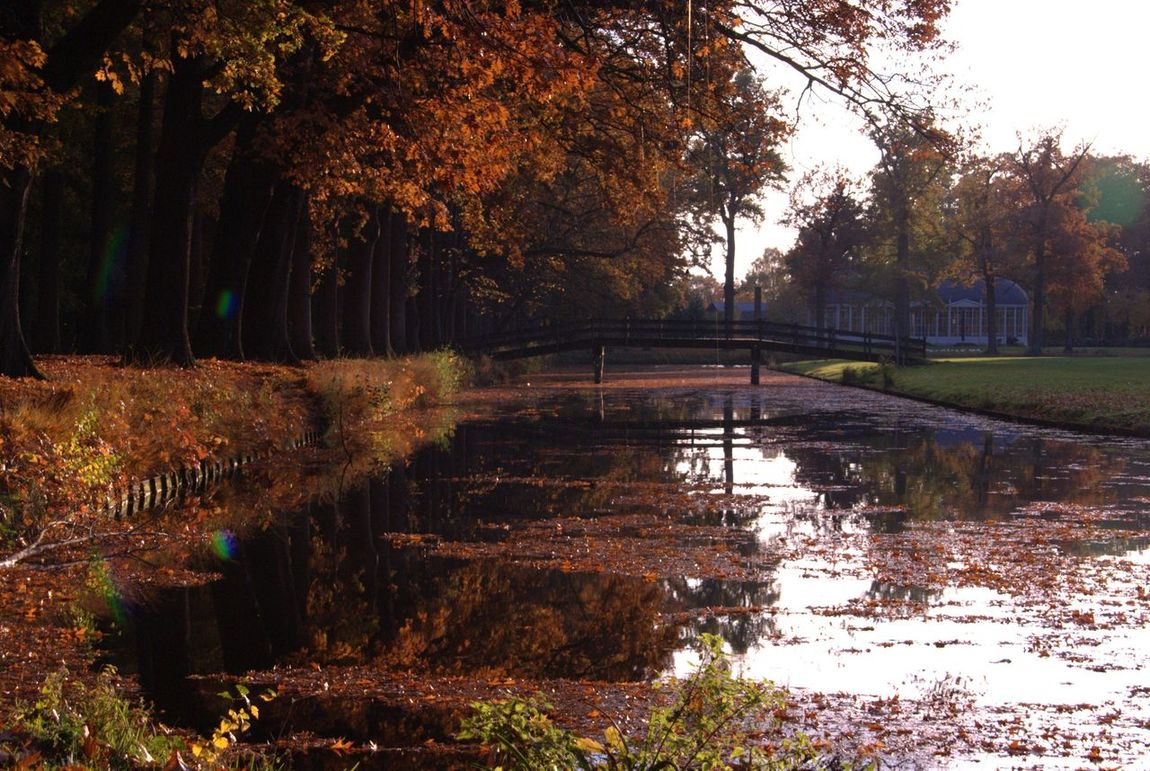 Fall Fall Colors Fall Leaves Water Water Reflections Bridge Park Walking Around Practicing Nikon Nikonphotography Nikon D60 Netherlands Netherlands Nature Barneveld Nature On Your Doorstep