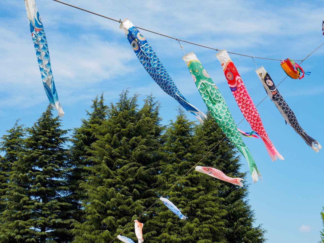 Celebration Hanging Sky Celebration Event Low Angle View Streamer Cultures Tree Carp Outdoors Event Multi Colored Day Holiday - Event Nature No People Close-up Japan Photography Tokyo Street Photography Springtime Swimming