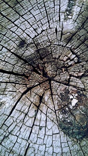 Wood Nature_collection Sitting into the Wildlife & Nature Texture Photo