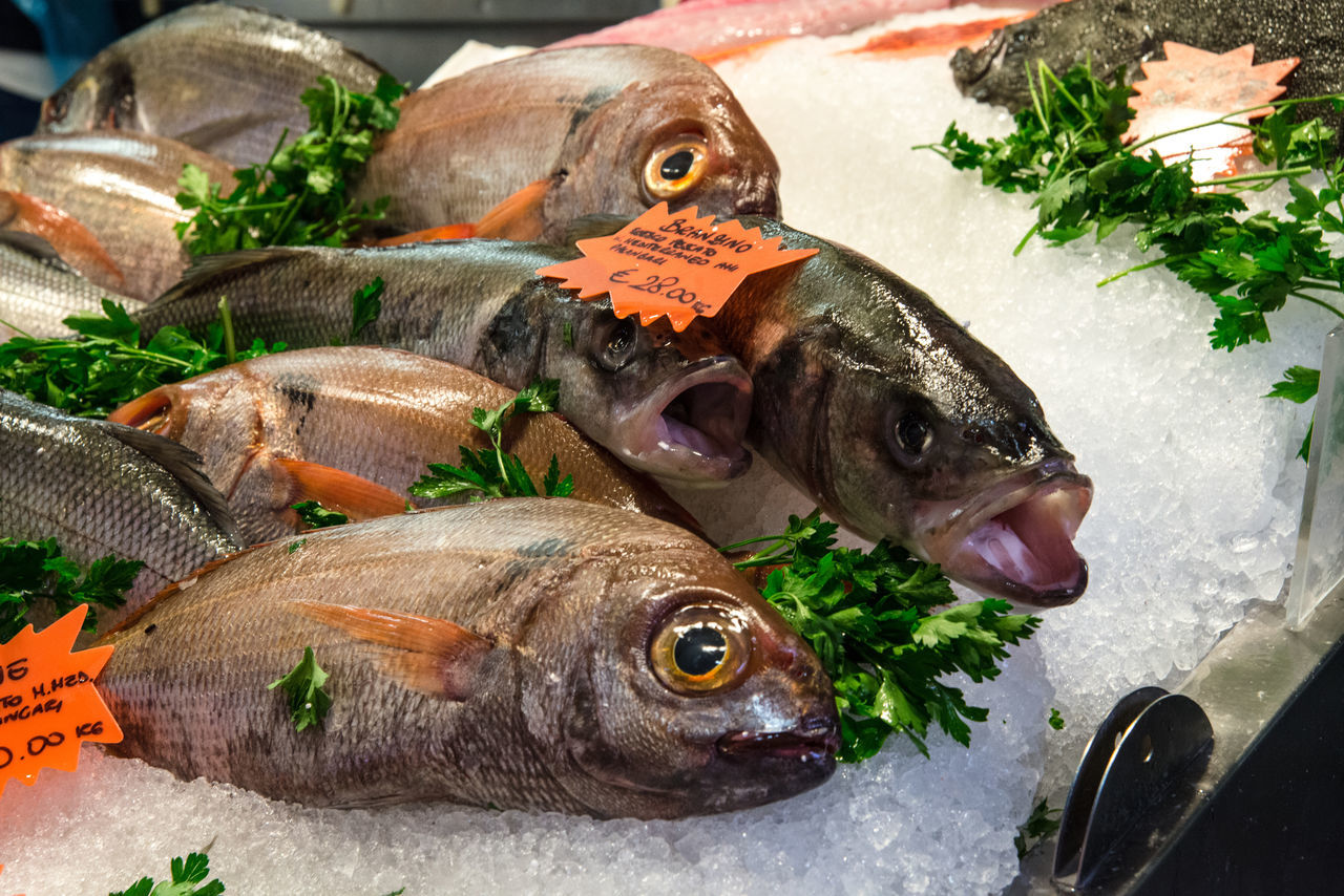Fish at Genova market Close-up Dead Animal Fish Freshness Ice Leaf Market Market Stall Meal Parsley Raw Food Retail  Sea Seafood Zoology