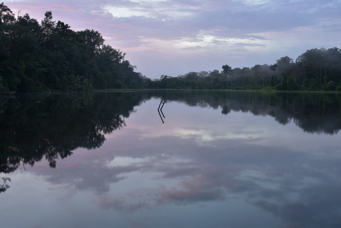 Amazonia Calm Countryside Distant Geometry Horizontal Symmetry Lake Lakeshore Majestic Outdoors Peru Reflection River Riverbank Scenics Standing Water Symmetry Tranquil Scene Tranquility Tree Tropical Climate Water Waterfront