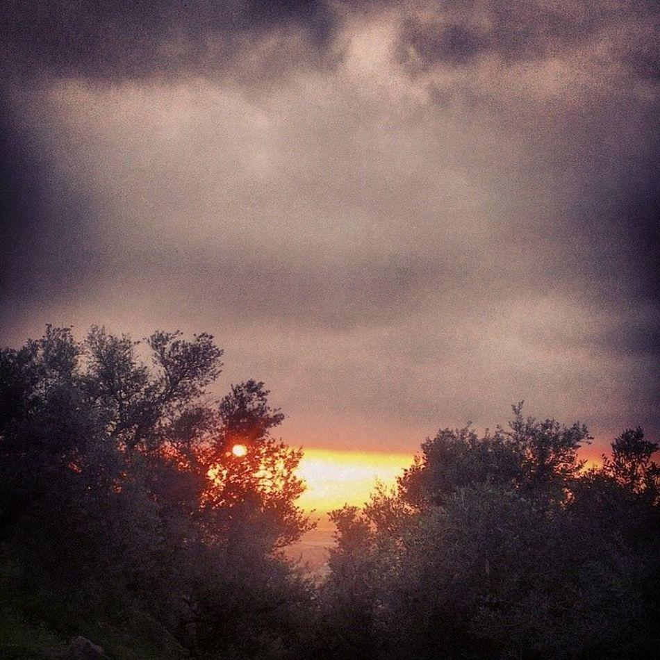 Bjadeh Hills Sunset Walking olivetree