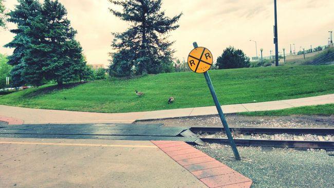 Uhh? Rail Road Rail Road Tracks Rail Road Sign Signs_collection