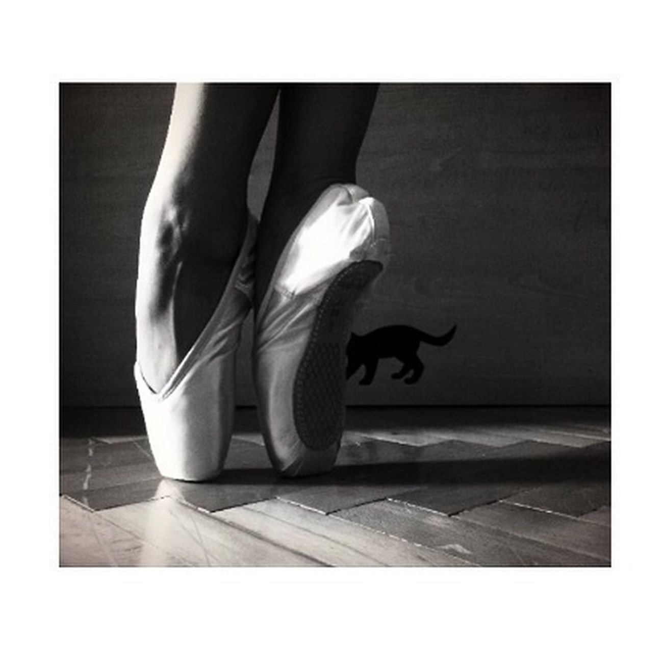 PointeShoes  Ballerina Ballet Pointe