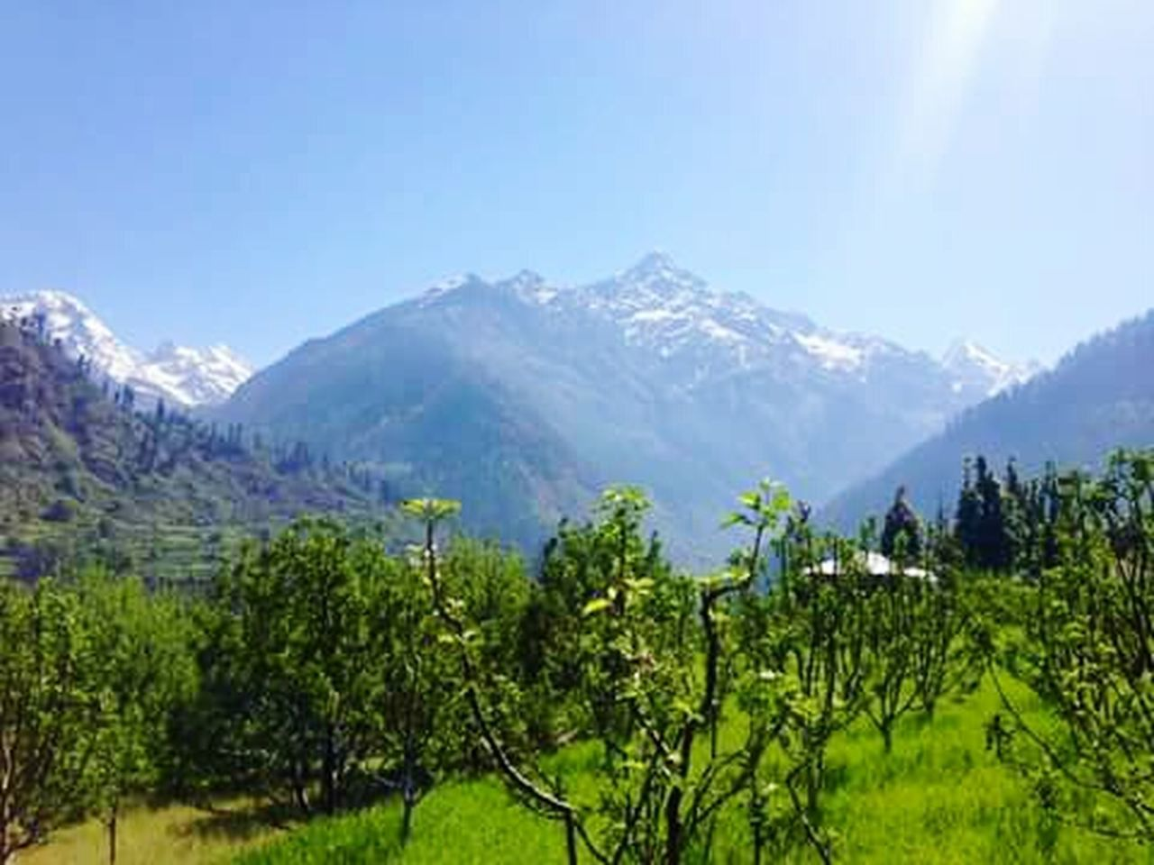 mountain, mountain range, scenics, landscape, nature, tree, agriculture, rural scene, green color, outdoors, clear sky, sky, beauty in nature, sunlight, day, forest, plant, no people, adventure, snow, freshness
