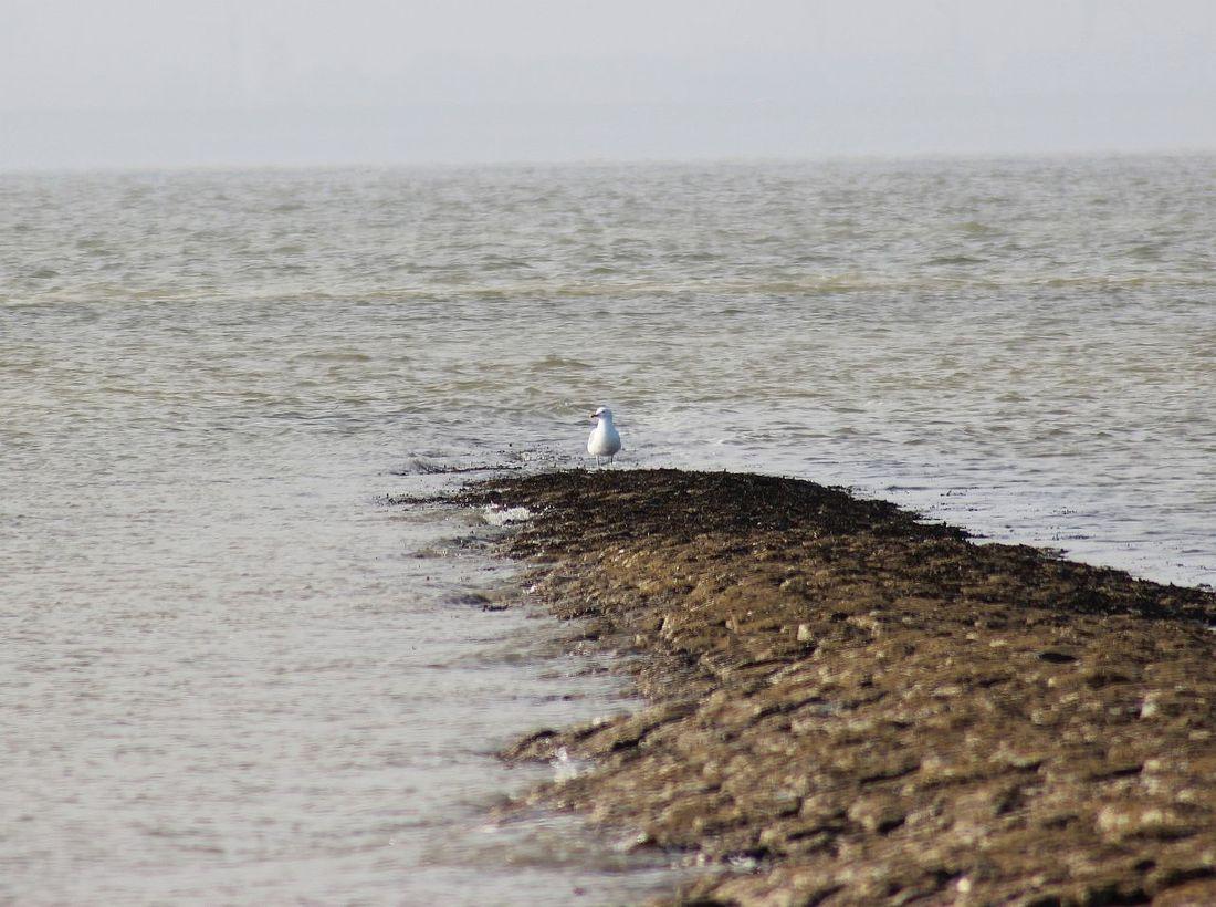 Coast Gull Küste Möwe Natur Nature Nordsee Northsea Steine Und Meer Wasser Water