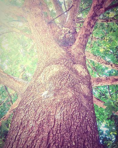 Tree Tree Trunk Tree Branches Leaves Nature Beauty In Nature Outdoors Daylight Light And Shadow High Angle View Day