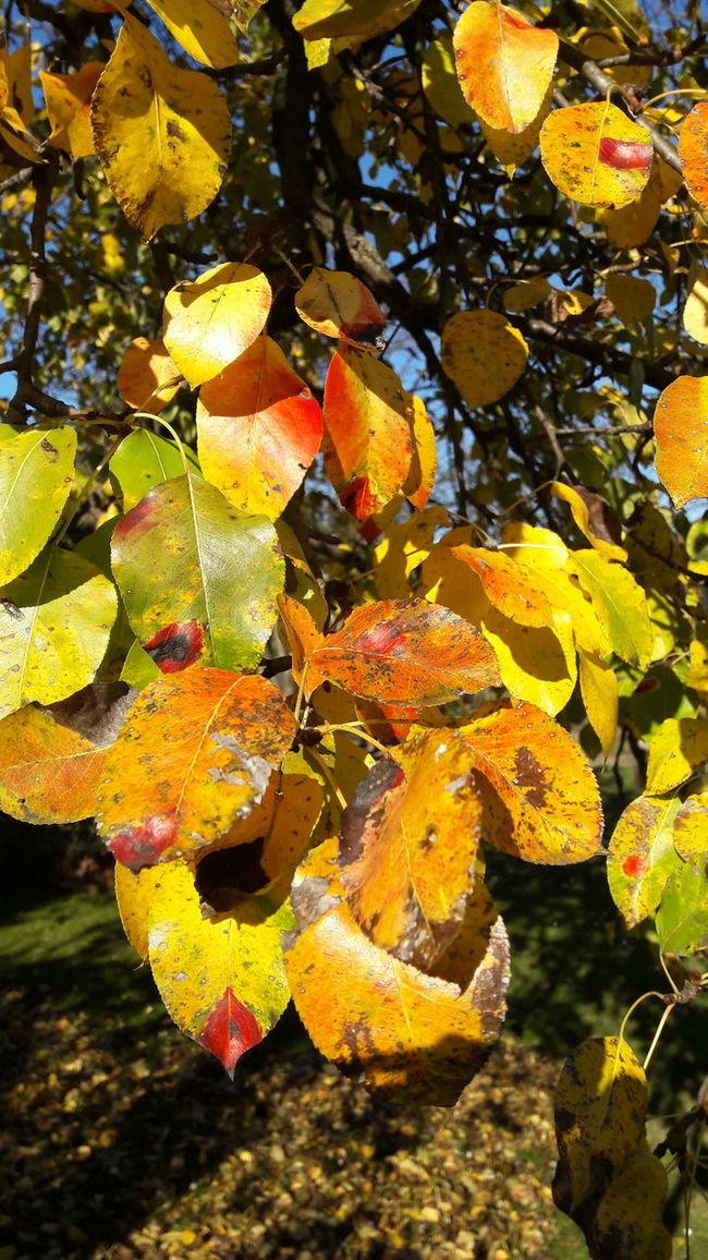 Sunshine No People Fallen Tree Fall Beauty Fall Fallen Leaves Beauty In Nature Fall Colors Tree Sky