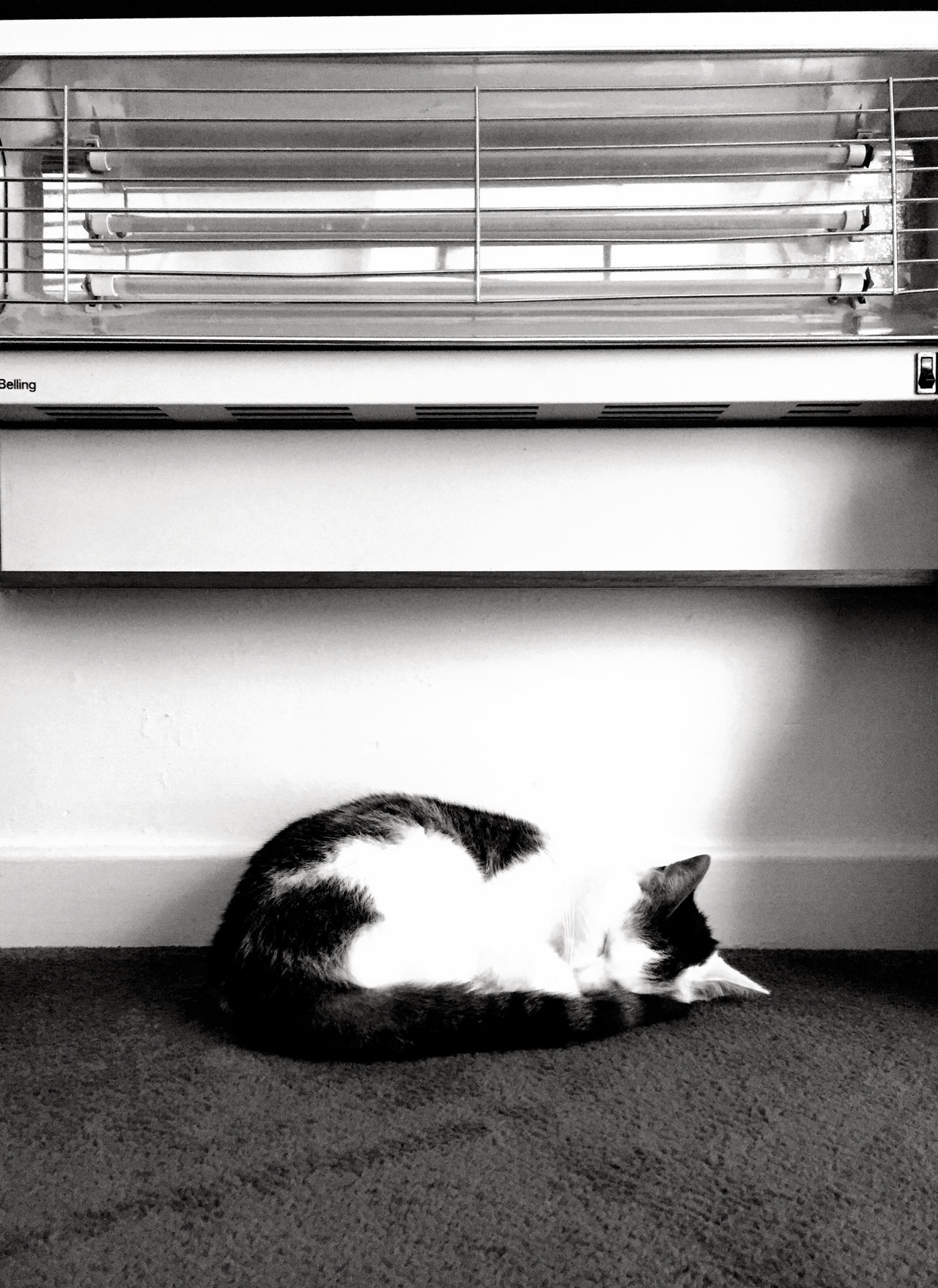 Electric fire cat Blackandwhite Sleeping Cat Electric Fire Flat Home IPhoneography